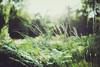 end of summer (In Memory Lane~) Tags: summer london nature grass 35mm dof bokeh mark ii 5d 35l