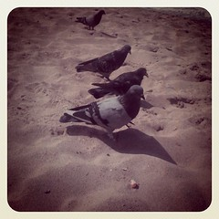 Beach Birds (allicette) Tags: bird beach birds out square four sand soft pigeon pigeons 4 filter washed vignetting squared unsaturated allicette allicettetorres instagram
