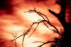The Power of Nature (Marianne Ellis) Tags: tree nature artisitc canon450d abodelightroom mygearandme
