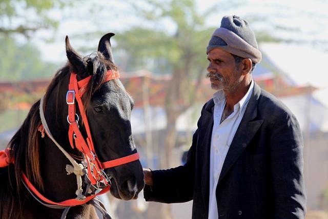 rajasthan camel fair