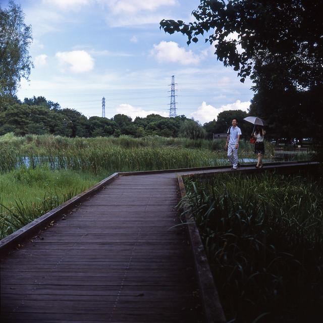 池上の木道