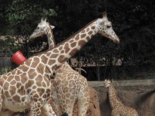 Zoo 0214