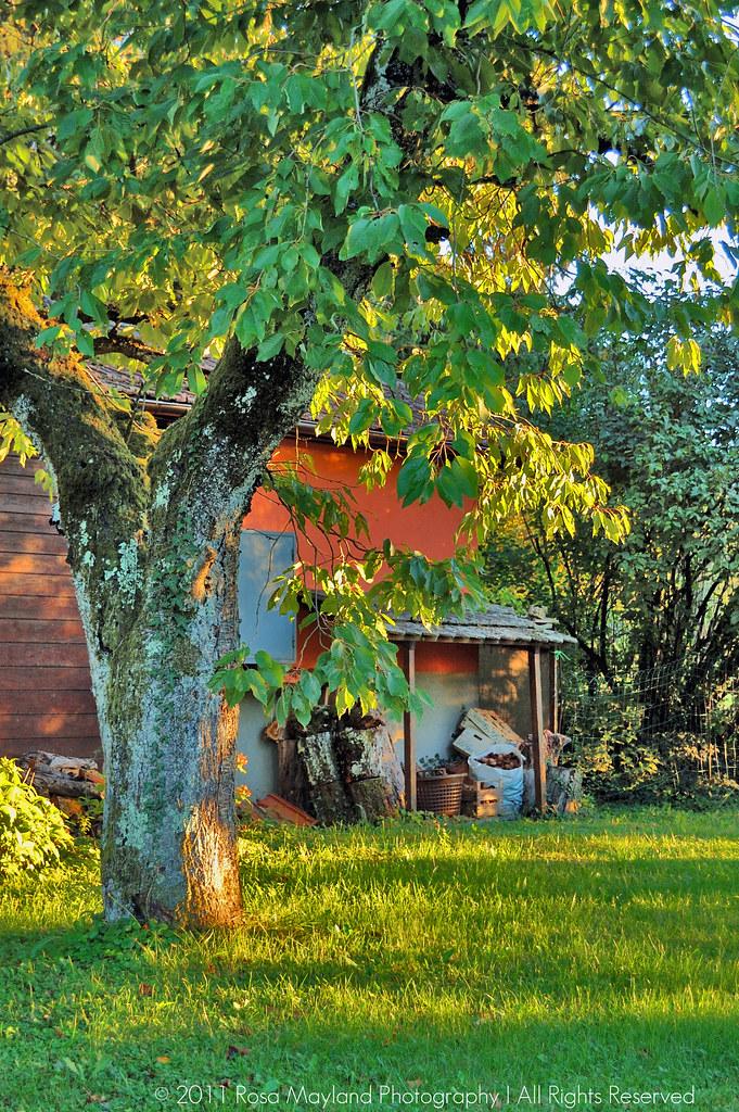 Garden Tree 1 1 bis