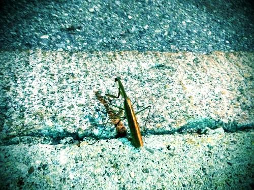 [262/365] Big Bug by goaliej54