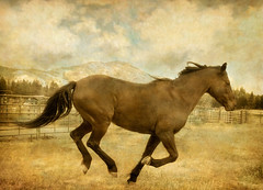 Horsing Around (EdBob) Tags: ranch horse texture grass animal rural washington soft farm winthrop tail country run farmland hills pasture hoof grassland methow equine mane mazama gallop easternwashington methowvalley ranchland colorphotoaward edmundlowe edlowe edmundlowe blinkagain allmyphotographsarecopyrightedandallrightsreservednoneofthesephotosmaybereproducedandorusedinanyformofpublicationprintortheinternetwithoutmywrittenpermission edmundlowephotography edmundlowestudiosinc