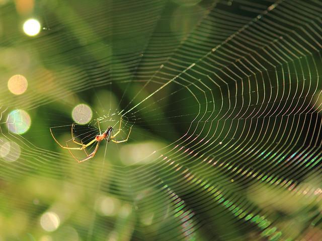 Spider 20110923