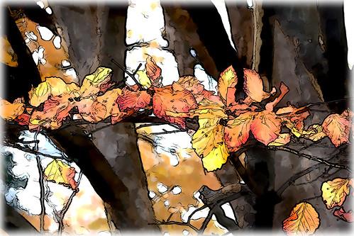 para animar al otoño, ya vale por hoy