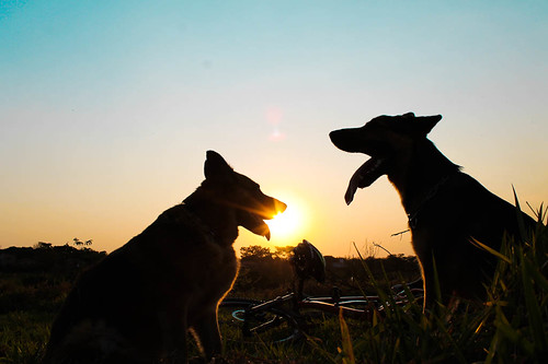 Dogs, Bike & the Sunset