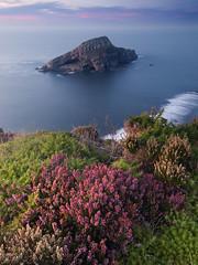 Deva (elosoenpersona) Tags: flowers sunset sea costa flores rock island atardecer coast mar spain long exposure asturias cliffs isla roca deva acantilados bayas elosoenpersona