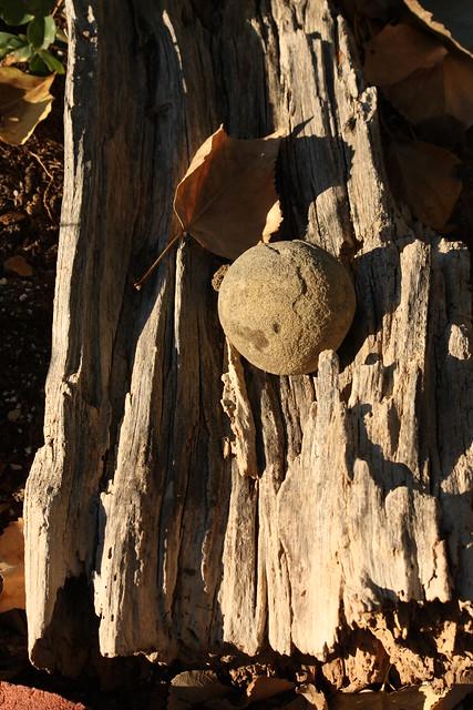 rock, wood, leaf