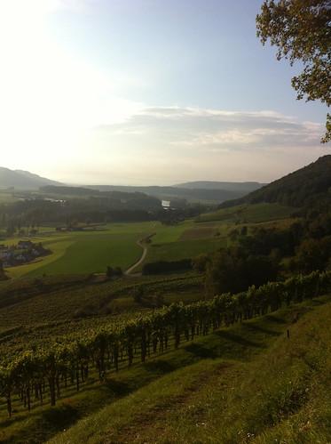 Vineyards around Stein am Rhein, Switzerland