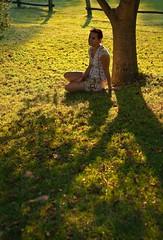 (350/365) (pinterpi) Tags: sunlight tree canon project eos 50mm day days 365 fa orfű napfény 450d pinterpi