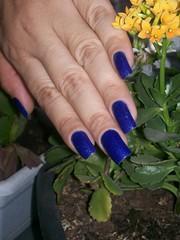 Azul Cobalto e Paz e Amor - Impala (deharaujo) Tags: azul amor paz e impala flocado colbato