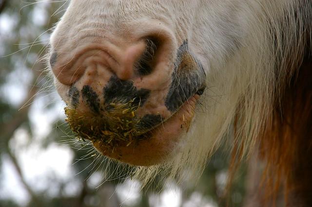 nose wrinkle