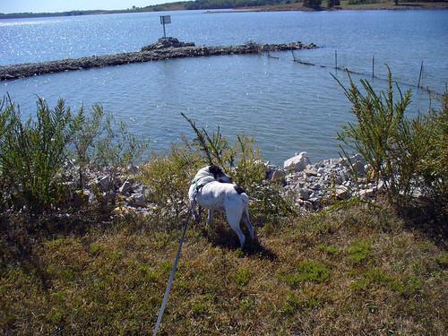 2011-09-30 - Smithville Lake - 0012