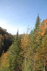 DSD_7708 (Greying_Geezer) Tags: autumn ontario canada fall colors colours scenic trains autumncolours railways railroads saultstemarie on algoma agawacanyon traintour