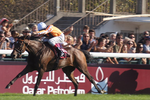 Orange was to be the colour - Danedream wins the 2011 Arc for Germany by CharlesFred