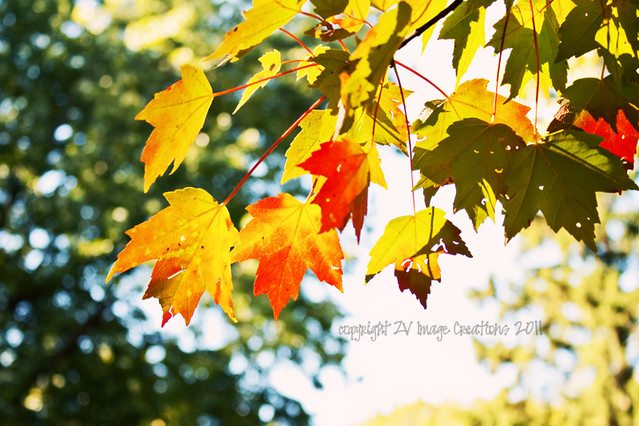 Leaves on bokeh