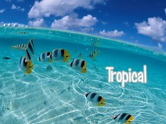 Tropical 1