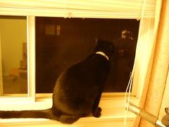 mole inspects Oakland apartment - 2