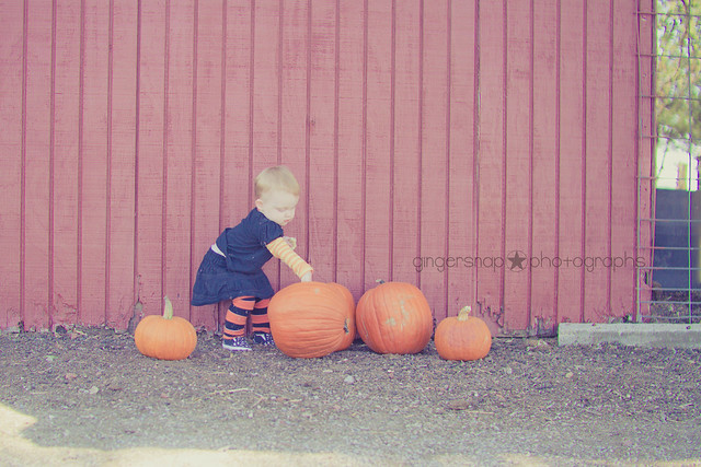 pumpkin patch10