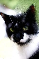 Jaspurr Through the Window (Kim Takes Photos) Tags: distortion window wet glass cat feline droplet condensation odc2 ourdailychallenge