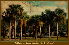 Welcome to Sunny Florida! (Chris C. Crowley) Tags: trees palms landscape priceless scenic palmtrees usaunitedstatesofamerica daytonabeachflorida chriscrowley downtowndaytonabeach celticsong22 welcometosunnyflorida scenicsnotjustlandscapes halifaxharbormarina vintagefloridapostcardlook