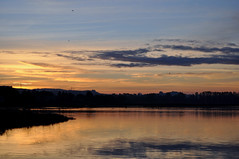Early morning moments (AnotherSaru - Limited mode) Tags: california morning orange water birds clouds sunrise dawn early pond nikon bayarea sonomacounty marsh ripples d90 50mmlens