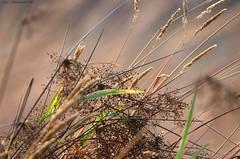 A Taste of Ridgefield (series) (Garebear400) Tags: nature scenics nwr ridgefield