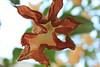 Flower (jkillart) Tags: life flower nature leaves hanging peachflower