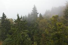 IMGP2342 (novakreo) Tags: austria sterreich europe bregenz pfnder vorarlberg benj:novakreo=1 benj:uploader=fuphp europe2011