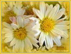 sweet yellow bouquet (MEA Images) Tags: flowers nature yellow gardens wisconsin blossoms parks blooms florals picnik racine awesomeblossoms photographyforrecreation flickrstruereflection1
