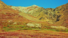 Autumn Mountains -  Denali National Park (blmiers2) Tags: travel blue autumn red mountain mountains green fall nature yellow alaska landscape photography nikon coolpix denali s3000 2011 blm18 blmiers2