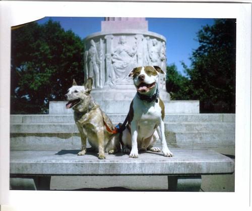 My Sweet Doggies