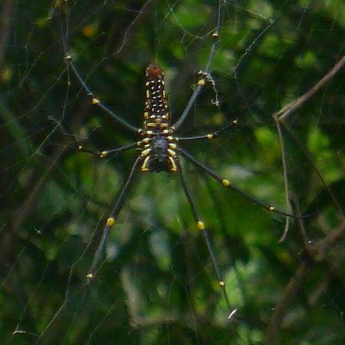 碇格路上的蜘蛛