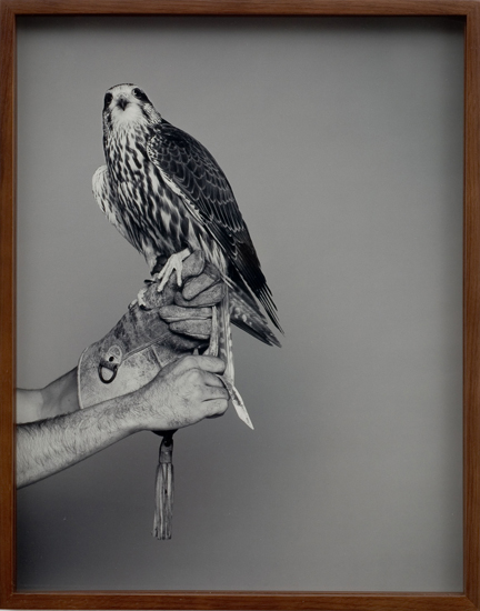 Elad Lassry, Eagle Glove, Falcon, 2008