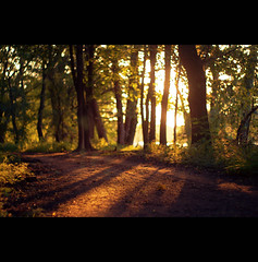 am See (~janne) Tags: sky sun berlin nature 50mm see flora sonnenuntergang sundown f14 natur pflanzen himmel olympus sonne wald wetzlar tegel leitz janusz tegelersee manuell summiluxr e520 ziob