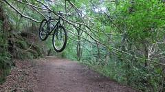 Gelt Woods (ambo333) Tags: wood uk england bike bicycle bicycling cycling woods mountainbike cycle cumbria biking mtb brampton gelt shimanoxt geltwood truetemper geltsdale geltwoods rivergelt khsmontanapro khsmontana geltwoodgeltwoodsrivergelt