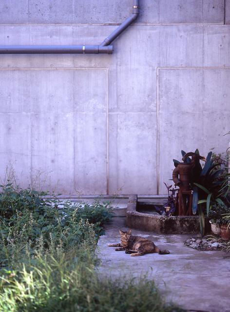 古井戸の記憶