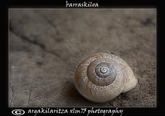 barraskiloa (xabi lasa mendibaso) Tags: caracol naturalezamuerta barraskiloa testurak naturahila xlmendibaso xlm75