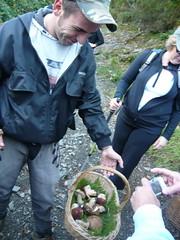 Porcini mushrooms (Hedonistic Hiking) Tags: tuscany cinqueterre lerici walkingholiday viafrancigena gulfofpoets hikingvacation borgocasale costadorsola foodwinetours locandadellido