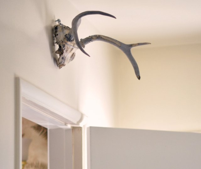 antlers above the door