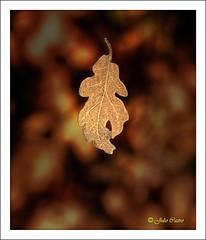 Estrenando estación (Julio_Castro) Tags: fall field leaves hojas nikon sierra campo otoño estación excursión nikond200
