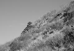Coastal Bluff (sandy richard) Tags: geology wildwood wildwoodstatepark newyorkstateparks longislandbeaches sandyrichard longislandgeology sandrarichard wildwoodstateparkgeology