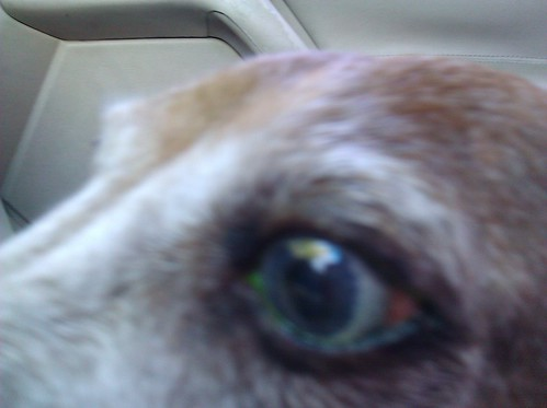 riley's radioactive eye