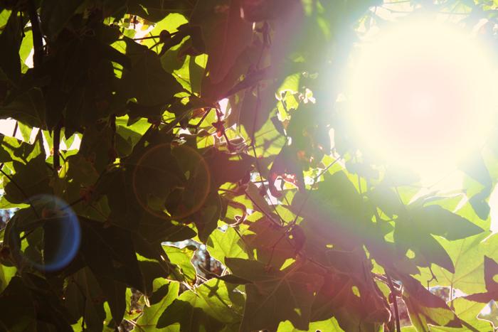 {september} sunflare