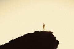 untitled (Esben Bg) Tags: ocean sunset sea cliff sun man reflection beach rock stone vulcan setting molted