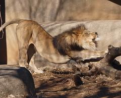 Louisville Zoo (Phyllis74) Tags: animals zoo louisville louisvillezoo
