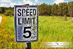 Speed Limit... (Chrissy Avila Photography (cHrIsSy1554)) Tags: landscape photography florida southfloridawildlife okaloacoocheesloughstateforest ©csquaredphotography chrissy1554 ©christinaavilaphotography ©chrissyavilaphotography wwwchrissyavilaphotographycom