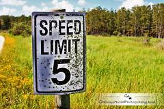 Speed Limit... (Chrissy Avila Photography (cHrIsSy1554)) Tags: landscape photography florida southfloridawildlife okaloacoocheesloughstateforest csquaredphotography chrissy1554 christinaavilaphotography chrissyavilaphotography wwwchrissyavilaphotographycom